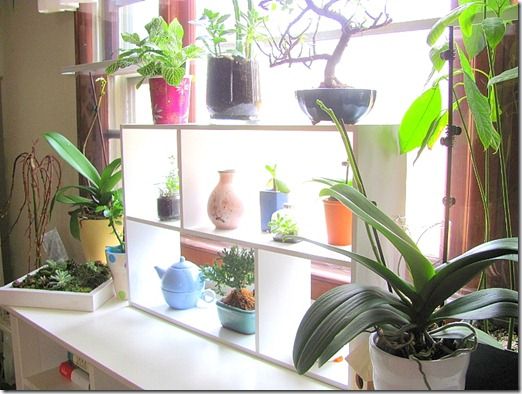 shelving for plants