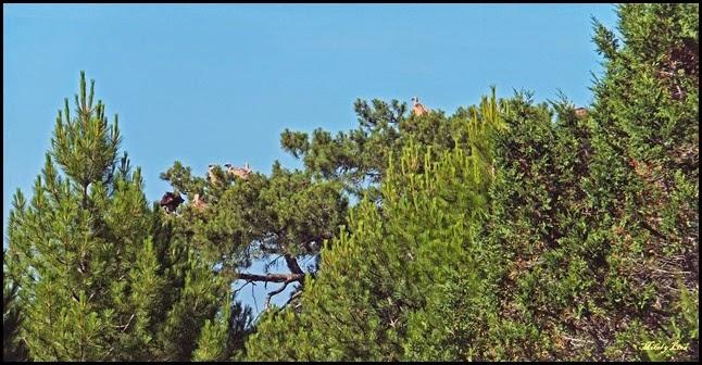 Rio Lobos 2014-07-13 010_editado-1