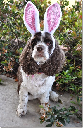 Puppy Easter Bunny