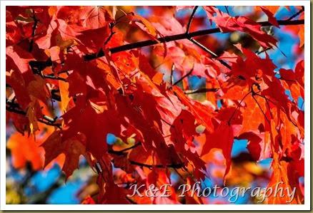 Fall 2013 (38 of 59)