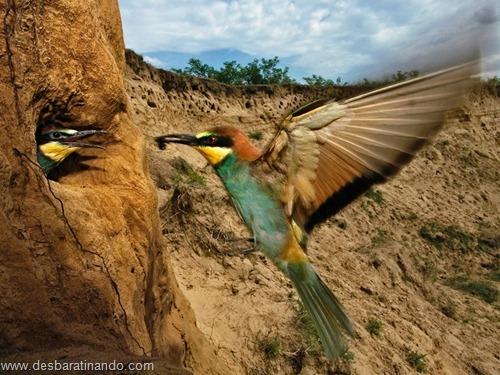animais national geographic desbaratinando  (9)