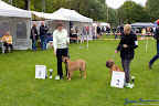 20100513-Bullmastiff-Clubmatch_30864.jpg