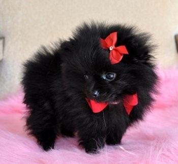 cachorrinho laço vermelho