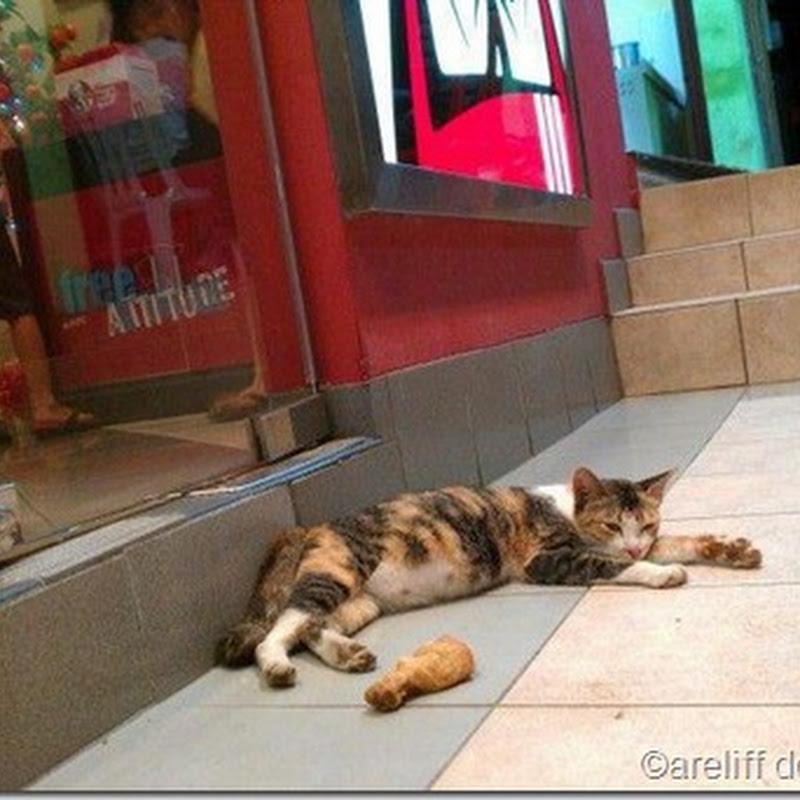 Aksi Kucing Merajuk Dengan KFC