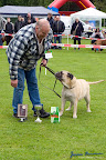 20100513-Bullmastiff-Clubmatch_31132.jpg