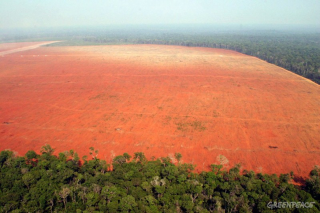 Illegal deforestation for soy production, in the North of State of Mato Grosso, Brazil, 2005. Greenpeace