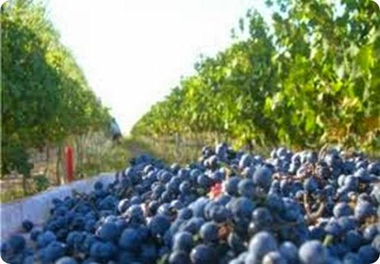 la ruta del vino en Rio Negro
