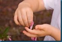 hand rose petal - touch 123fr