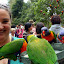 Natalie Feeding the Lorikeets at Lone Pine Sanctuary - Brisbane, Australia