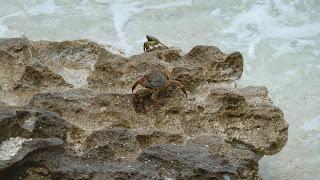 Krabben.