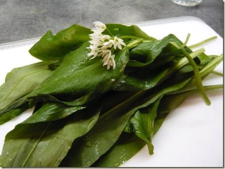 wild garlic 1