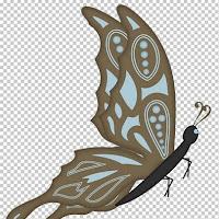 butterfly3c.jpg