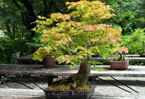 Glória Ishizaka -   Kyoto Botanical Garden 2012 - 55