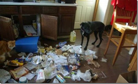 funny-cats-dogs-destroy-house-023
