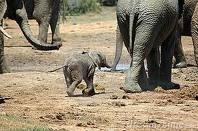 elephant six