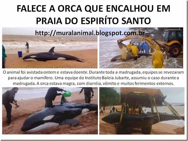 FALECE orca