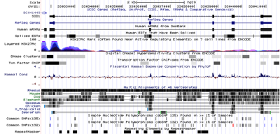 Hgt genome 596a ac7fe0