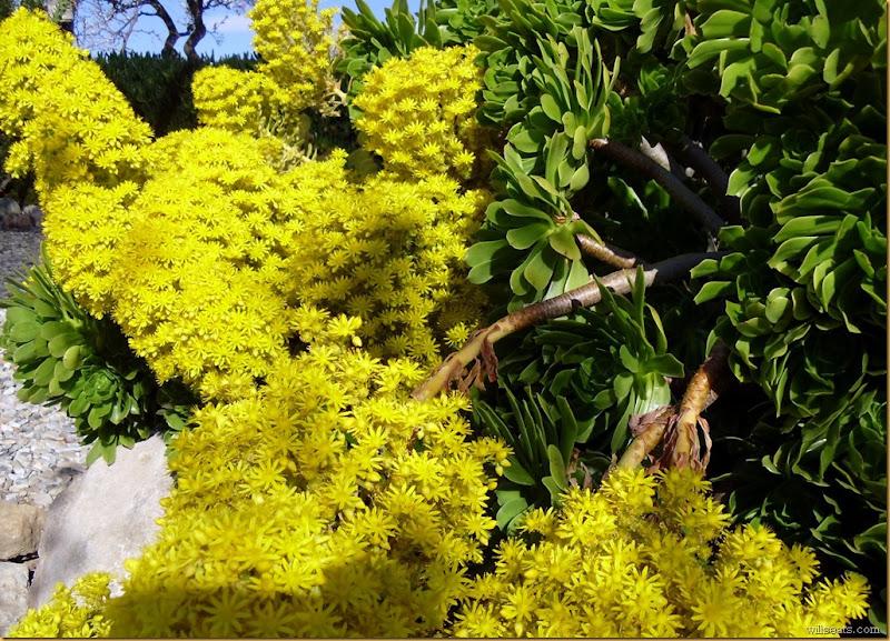 green-succulent-ene-014