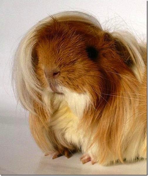 awesome-animal-haircuts3