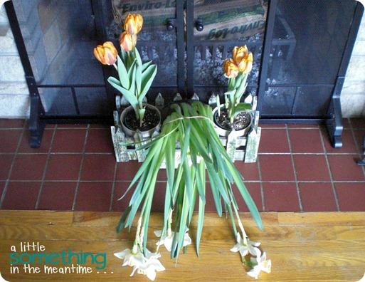Daffodil Fail