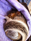 Frances of Pleasantville - Squirrel Rescue Part I