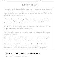EL INSECTO PALO-1