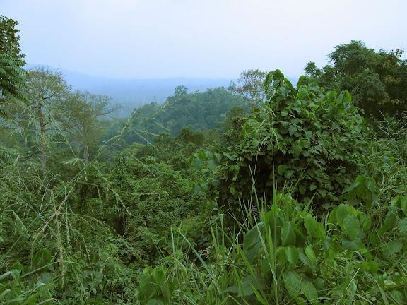 Atewa Range Forest Reserve (Atiwa-Atwaredu Range). Ghana, 4 janvier 2006. Photo : J. F. Christensen