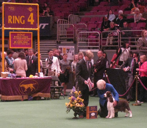 Best Of Opposite English Springer Spaniel