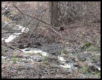 stream thru the woods