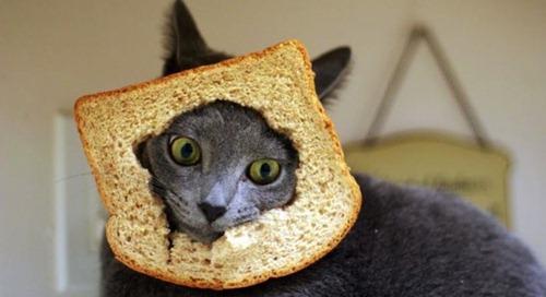 breading-11