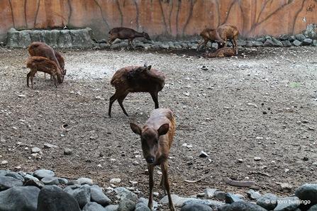 manila zoo 19