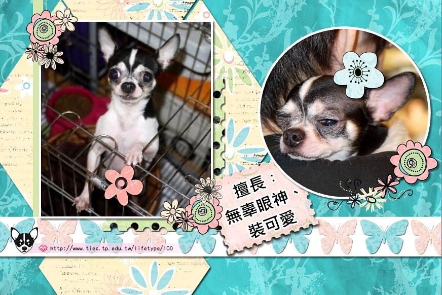201007minibook-dog08.jpg