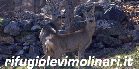 Vai al sito del Rifugio Levi Molinari