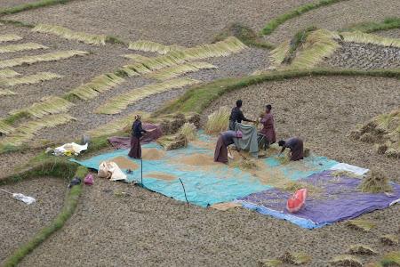 Imagini Bhutan rural