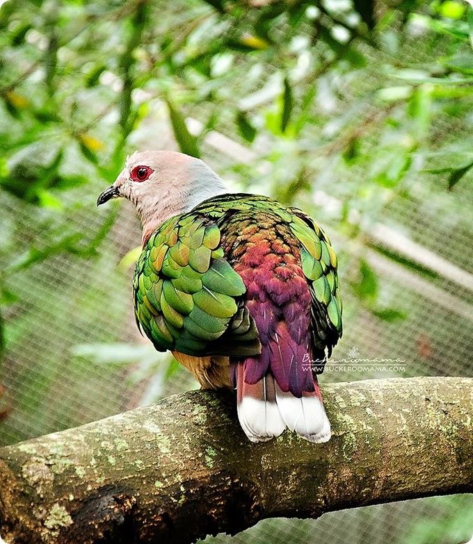 Bird-(green)-1
