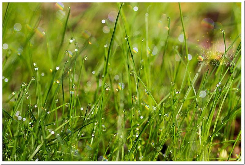 dewdrops-4749