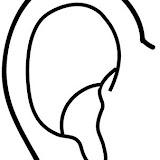 Partes del cuerpo: oreja