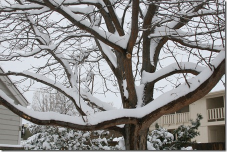 2013-04-15 Snow! (14)