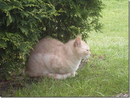 2013_05 Tommy im Garten (5)