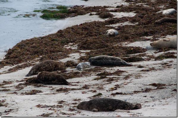 Harbor Seals - Monterey, CA