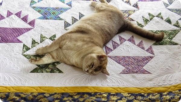 Kaiser cat napsIMG_1019