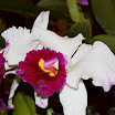 Orchids043.JPG