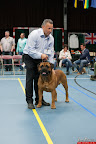 20130510-Bullmastiff-Worldcup-0803.jpg