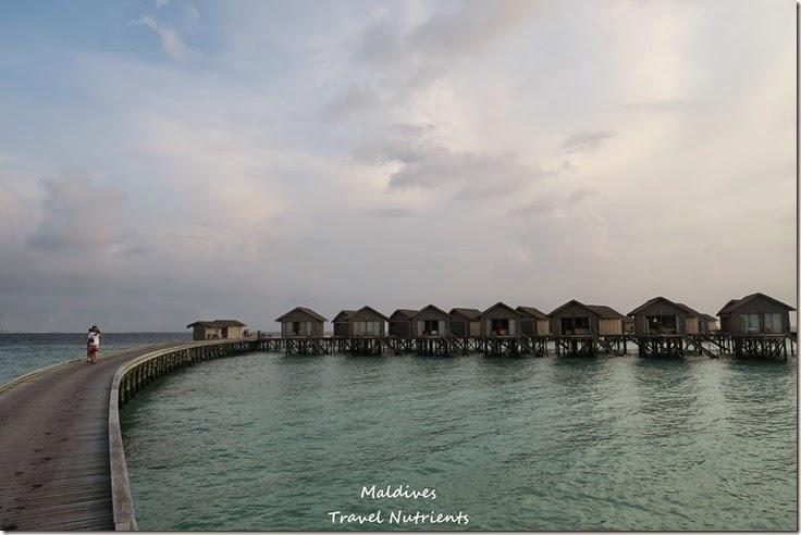 馬爾地夫 Centara渡假村 (41)