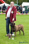 20100513-Bullmastiff-Clubmatch_31143.jpg