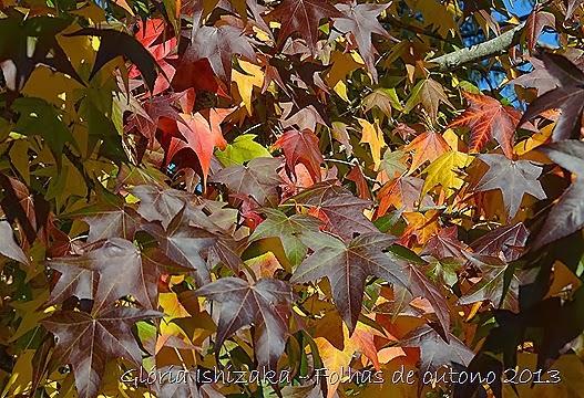 2  Glória Ishizaka - Folhas de Outono 2013