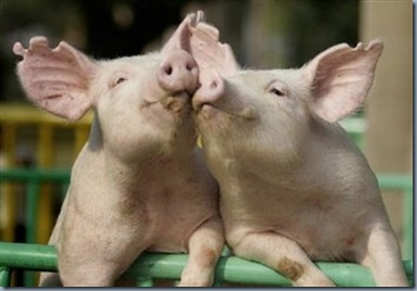 PigLove