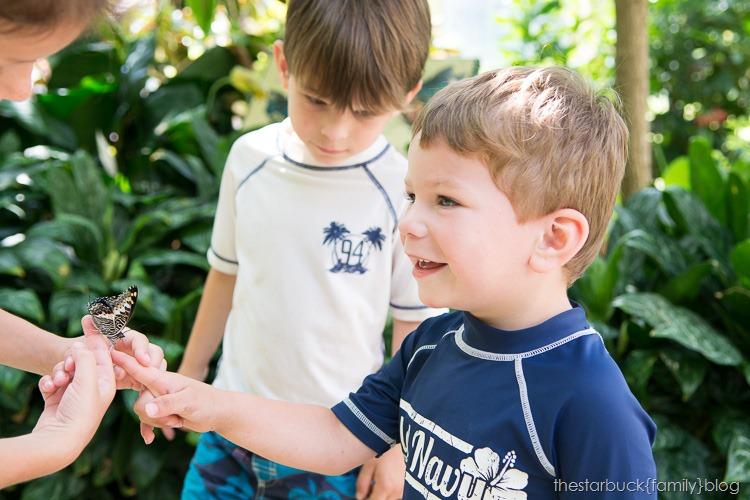Callaway Gardens butterfly garden blog-21