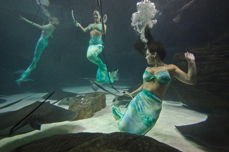 weeki-wachee-mermaids-12
