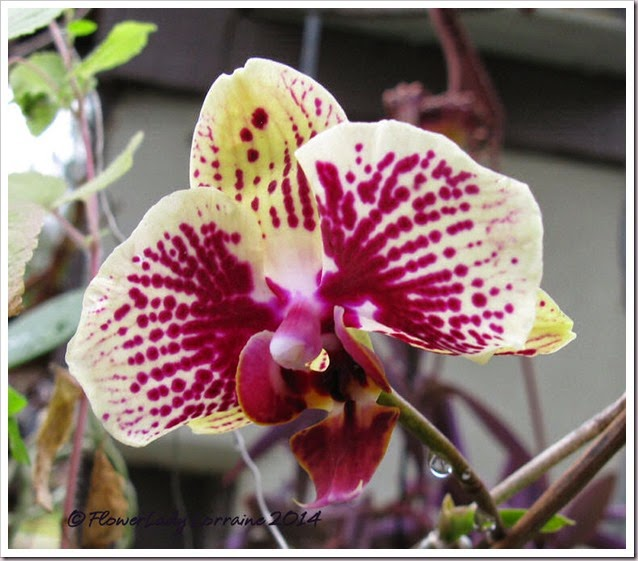 03-18-unkn-orchid4